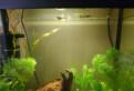 Аквариумные рыбки, гуппи