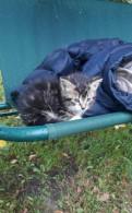 Котёнок ищет дом, Малое Верево