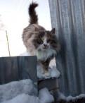 Кошка в добрые руки, Павлово