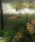 Аквариумные рыбки, растения, и т.п
