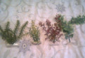 Искуственные растения в аквариум, Санкт-Петербург