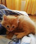 Котенок - мальчик 3 месяца
