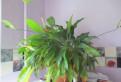 Домашний цветок, Мурино