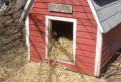 Солома ржаная в мешках для подстилки для собак