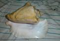 Морская раковина большая