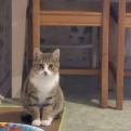 Котенок-подросток очень ищет добрые руки