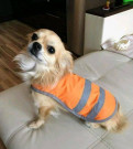 Светоотражающий жилет для собак S, M, L