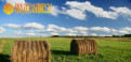 Сено, сено в кипах и рулонах. Зерно и комбикорма, Красное Село