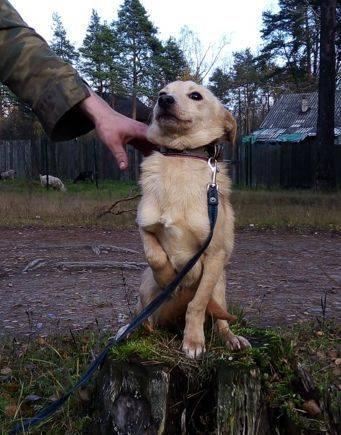 Ищет дом подросток мелкой собачки Марсик