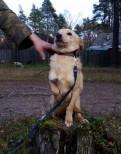 Ищет дом подросток мелкой собачки Марсик, Санкт-Петербург